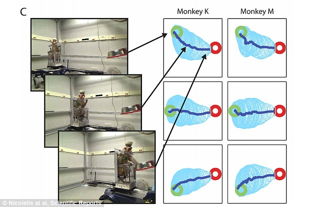 Three video frames (left) show Monkey K driving towards the grapes. The right panel shows the average driving trajectories (in dark blue) from the three different starting locations (shown by a green circle) to the grape dispenser (red circle). The light blue ellipses are the standard deviation of the trajectories